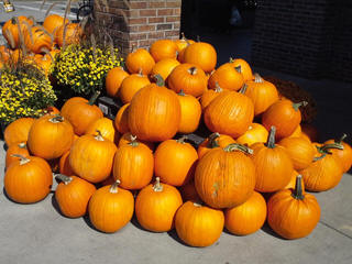 Thanksgiving pumpkins